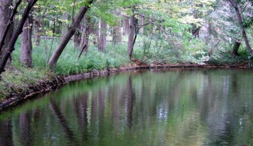 釣り禁止の野池を増やさないために釣り人自身が行う取り組み5選